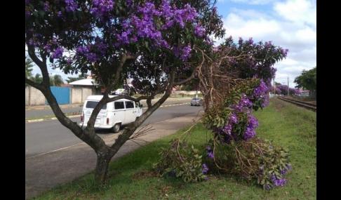 Secretaria do Meio Ambiente alerta sobre vandalismo em árvores