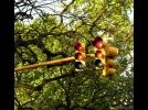 Prefeitura de Franca vai instalar semáforos em alça de acesso à c