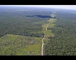 Cortes no Ibama explicam aumento de desmatamento, alerta Noruega