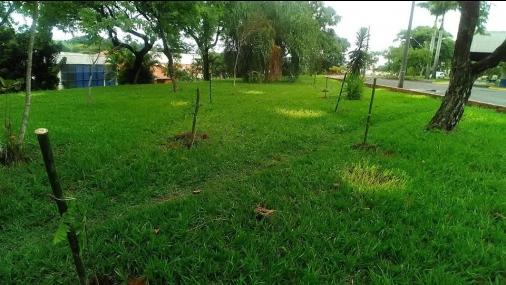 SEMADES completa a 1ª etapa do Programa de Arborização