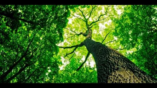 Prefeitura disponibiliza Guia de Arborização de Cerquilho