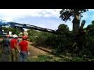 SEMADES intervém em árvores na Rua Prefeito Elias de Moura