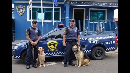 Ações com cães são o diferencial da GCM
