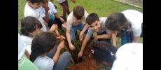 Prefeitura realiza projeto de compostagem e plantio de árvore