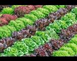 Inscrições abertas para o Programa Horta Orgânica