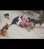 Animais vítimas de abandono em Tietê